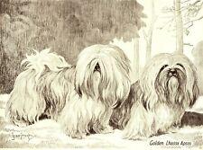 1930s Antique Lhasa Apso Dog Print Golden Lhassa Apso Scott Langley Art 3751g