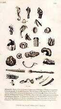 Paleontology Fossils Shells 1837 Antique Engraved Biology Print
