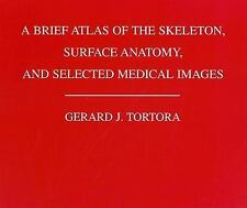 A Brief Atlas of the Human Skeleton : Surface Anatomy and Selected Medical Imag…