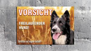 Warnschild - Freilaufender Hund Feld - Border Collie - Aludibond