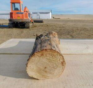 Montana Black Cottonwood Hand Peeled Live Edge Wall Mount Rustic Free Shipping