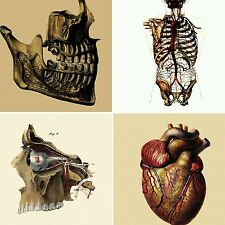 Set of 4 Greeting Cards of Re-imagined Vintage Anatomical Images