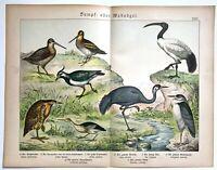 1886 SCHUBERT Antique Print: HERON IBIS LAPWING BIRD NATURAL HISTORY Decor