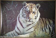 Tiger Portal Print Vintage Wildlife photo  Poster 1970's