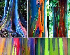 100 Eucalyptus deglupta Seeds. rainbow eucalyptus, Mindanao gum, .rainbow gum