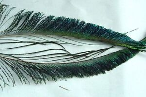 PAIRE de couteaux PAON montage mouche peacock sabre feather fly tying