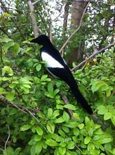 Realistic Flocked Magpie For Larsen Trap Cage Decoy Bird Hunting Shooting