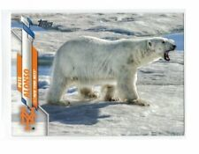 New Listing2020 Topps Series 1 Pete Alonso Polar Bear Photo Image Variation Ssp Read Desc.
