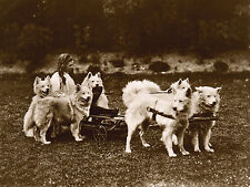 SAMOYED LITTLE GIRL DOGS AND SLED OLD PHOTO IMAGE ON DOG GREETINGS NOTE CARD