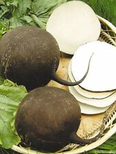 Seeds Radish Black Winter Giant Vegetable Organic Heirloom Russian Ukraine