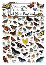 BUTTERFLIES - COMMON AND SOME EXOTIC OF NEW ENGLAND POSTER GREETING CARD