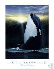 """NEW! Killer Whale16x20"""" Fine Art Print by Dobrowolski"""
