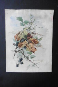 FRENCH SCHOOL 19thC - STUDY BRANCH WITH BLACK BERRIES - W'COLOR SIGNED LISBONNE