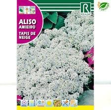 Aliso Tapis Neige Blanco (Alyssum maritimum) 4g /10.000 semillas seeds Lobularia