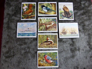 8 x PLAYER'S CIGARETTES Collector's Cards Wild Birds Naval Prints British Liners