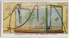 Community Tank for Tropical Fish Aquatic Plants Vintage Trade Ad Card
