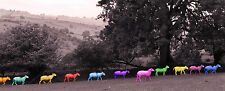 Photographic poster of multicolored sheep in line, new