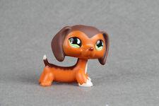 Littlest Pet Shop Figure Toy Savannah Savvy Dachshund Dog puppy Lps558