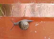 1.5 Mètre x 25 mm rouleau Limace Cuivre Ruban efficace escargot antiparasitaire insectifuge UK