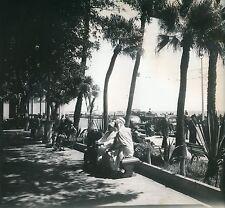 ALGÉRIE c.1950 - Autos Avenue Bord de Mer Détente sur les Bancs Alger- Div 10595