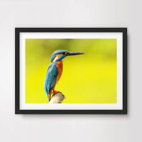 KINGFISHER BIRD ANIMAL WILDLIFE PHOTOGRAPHY ART PRINT Poster Wall Picture