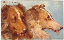 POSTCARD DOGS COLLIES ARTIST-SIGNED PHILIP E. STRETTON