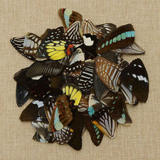 Fashion 50 Pcs Butterfly's Wings Material DIY Artwork Jewelry Handmade Random