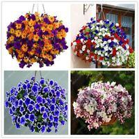100pcs hanging petunia seeds melissa original flower seeds perennial flowers for