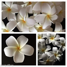 Hawaiian Plumeria Foam Flower Hair Clip Aloha White