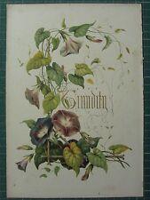 1848 stampa ~ CONVOLVOLO-timidezza-Fiori e i loro pensieri Kindred