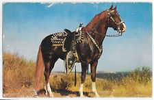 Hoss Horse Brown with White Legs Hooves With Saddle Vintage Equine Postcard