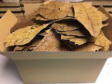 feuilles d'amandes de mer 0,7 kg B-Ware catappa Traitement d'eau Ketapang