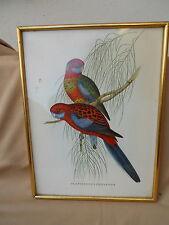 """5 Anciennes gravures estampes oiseau L'ornithologie """" Delichon Nipalensis....."""""""