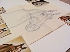 Horse #5 Pencil Sketch Drawing by Shary B Akers & Original Vintage Photos