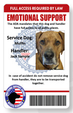 Service/emotional support dog handler ID card printed in vivid full color