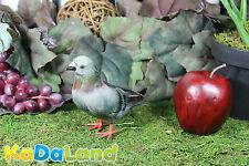 Feather Gray Pigeon Adorable Furry Animal Taxidermy Figurine plush Decor Cabin