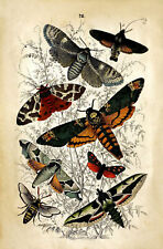 More details for antique natural history reproduction print of moths 18th century