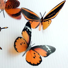 100 Pack Butterflies - Cola - 5 to 6 cm - Topper, Weddings, Crafts, Cards,