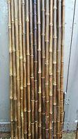 Bambusrohr nigra schwarz 35-45 mm 2m Bambusrohre Bambusstange Bambus black