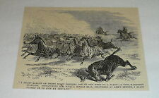 New listing 1878 magazine engraving ~ Culling A Heard Of Zebras