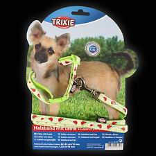 Small Glow Ladybird Collar & Lead - small breed, puppy, glow in the dark, high v