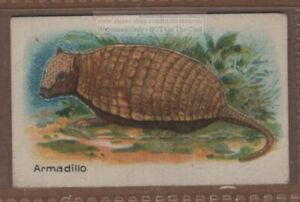 Armadillo with Pop-Up Image 1920s Trade Ad Card
