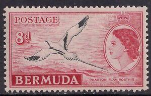 Bermuda 1953 - 62 QE2 8d White Tailed Tropic Bird MM SG 143a ( M1247 )