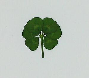 Vrai Heureux Six 6 Feuille Trèfle Trèfle Trifolium repens Pressés Sec Très Rare