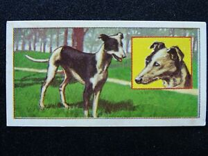 No.29 WHIPPET Puppies by Molassine Co Ltd VIMS DOG FOOD 1967