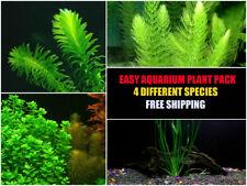 15+ Stems / 4 Species - Easy Live Aquarium Plant Package -  | Low Maintenance
