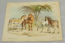 1850 Antique COLOR Print/WILD ASS, CART HORSE, ARAB HORSE, BURCHELL'S ZEBRA/Hand