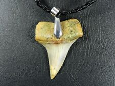 Fossil Bakersfield Mako Shark Tooth Teeth Silver Plated Necklace Pendant