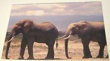 Animal African Elephant Animal Emergency relief - unused