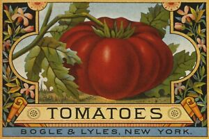 Tomatoes Red Tomato Plant Food Kitchen Decoration Vintage Poster Repro FREE S/H